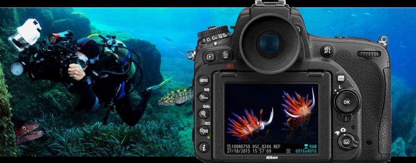 In prova Nikon D750 e Nikon D810