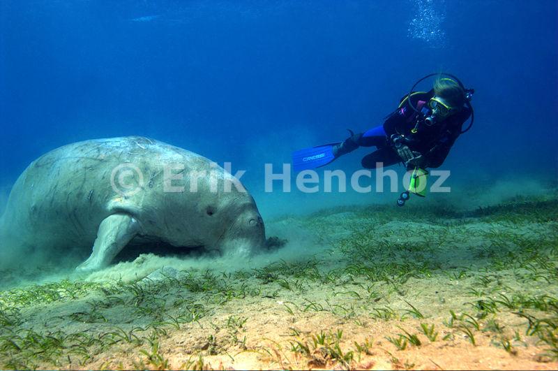 La Subacquea e il Dugongo - Marsa Abu Dabbab - © Erik Henchoz